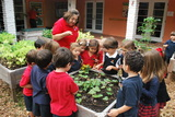 Students in Senior Kindergarten through Grade 2 learn the benefits of organic gardening.  They have planted tomatoes, green peppers, eggplant and herbs. They tend to their plants each day.