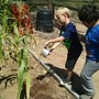 Kino Learning Center Photo #2 - Helping in the garden is an activity for all ages. As a homeroom activity, or a plant science class.