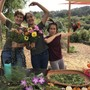 East Bay Waldorf School Photo #1 - Working in our expansive organic garden gives our students a hand-on experience with the natural world, the cultivation of food, and practical skills to be self-sufficient. And time to have fun!