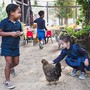 "Hillbrook School Photo #10 - Our students take turns on ""chicken duty"" and learn about how to care for and connect with animals and their habitats."