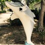Clearwater Academy International Photo #7 - Knights Dolphin!