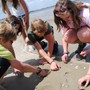 St Andrew's School Photo #6 - Eighth graders studying ocean life on Tybee Island